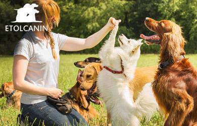 Pack mensual de clases de adiestramiento canino: 6 sesiones de ed