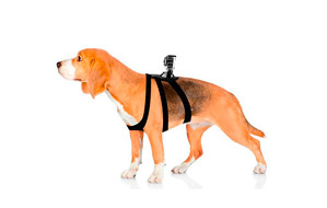 Arnés Ajustable de Perros Universal